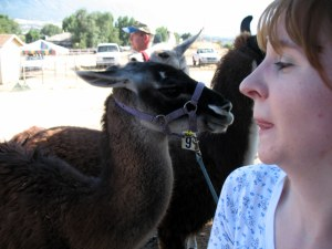 Me being nervous about the llama