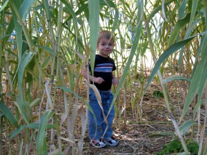 Unsure why they had a bunch of cornstalks, unless it was for Halloween, but Brandon was happy hiding in them.