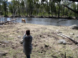 Once the elk came around to our side of the log we took off, but Krista was much more daring than I was.