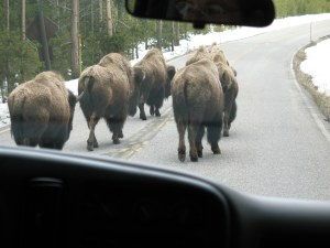I liked these buffalo because one moment they were just walking along...