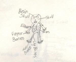 Including: brain skull, skull, elbow, ribs, finger bones, toe bones, and leg bones.